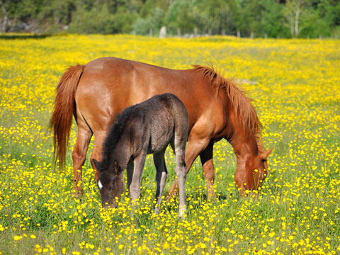 horses-derbyfabrics2.jpg